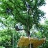 Baumplattform in luftiger Höhe
