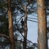 Im Baum