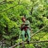 Mit Seil und Klettergurt in der Baumkrone